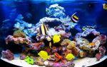 Стоит ли заводить рыбок домой: плюсы и минусы