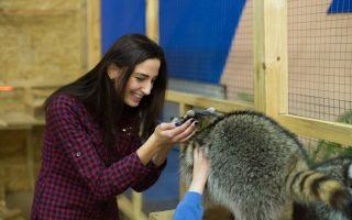 Плюсы и минусы содержания животных в зоопарке