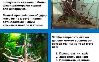 Нужны ли коряги в аквариуме: плюсы и недостатки