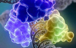 Жизнь человека без желчного пузыря: плюсы и минусы