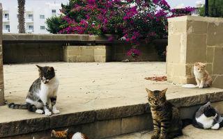 Плюсы и минусы жизни на Кипре: способы эмиграции из России и нюансы трудоустройства