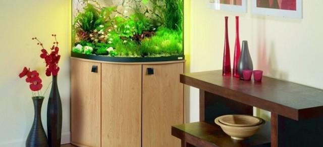 Плюсы и минусы установки аквариума в квартире