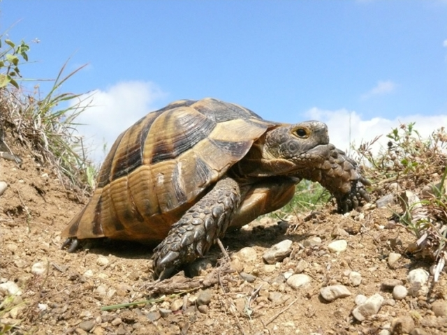Стоит ли заводить черепаху: плюсы и минусы животного