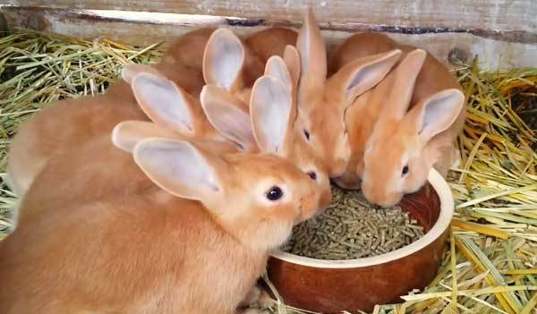 Плюсы и минусы присутствия кроликов на даче