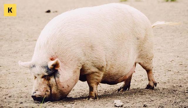Единый сельскохозяйственный налог ЕСХН: плюсы и минусы