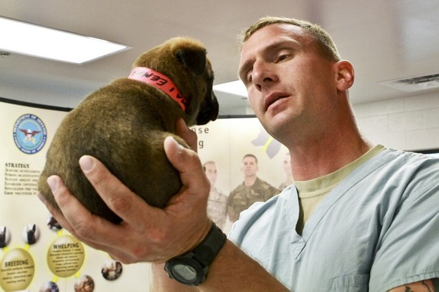 Преимущества и недостатки профессии ветеринара