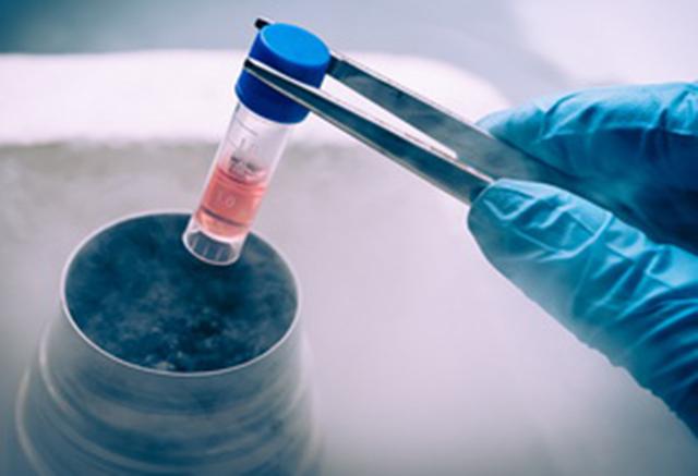 Заморозка эмбрионов при ЭКО: плюсы и минусы