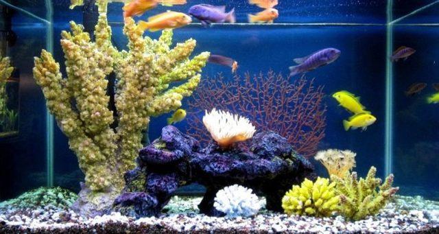 Белый грунт в аквариуме — плюсы и недостатки