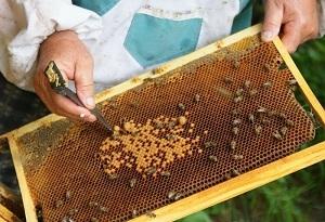 Стоит ли заниматься пчеловодством — плюсы и минусы