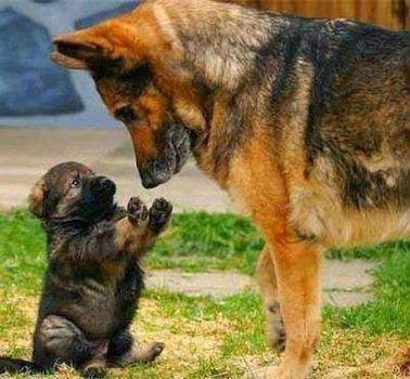 Стоит ли брать себе собаку из приюта: плюсы и минусы