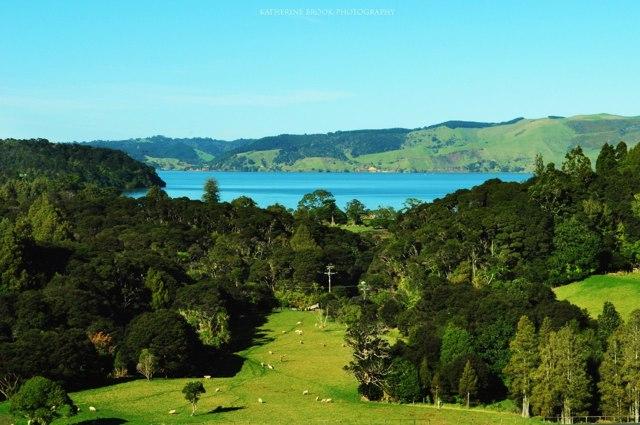 Жизнь в Новой Зеландии: основные плюсы и минусы