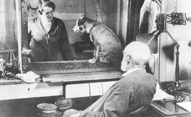 Плюсы и недостатки экспериментов над животными