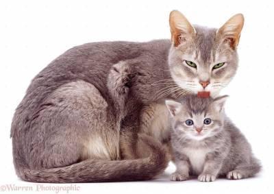 Стоит ли брать себе взрослого кота?