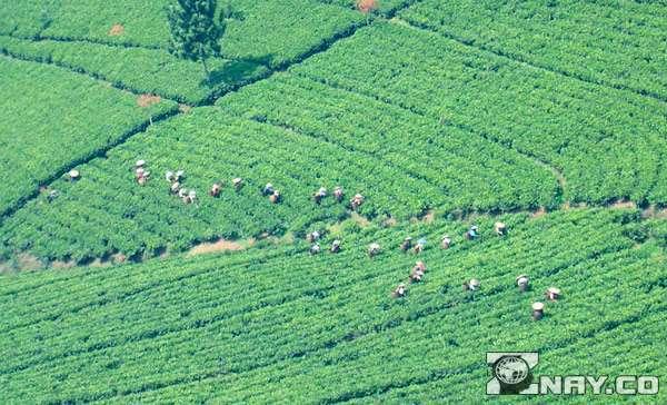 Главные плюсы и недостатки аграрной революции