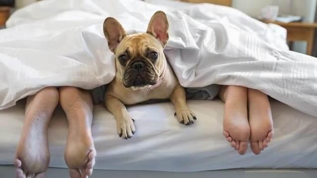 Плюсы и недостатки заведения второй собаки