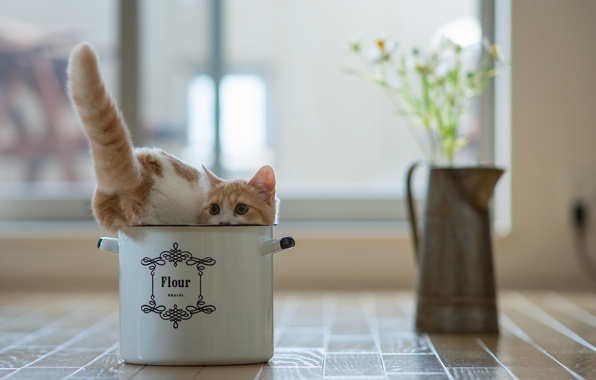 Две кошки в доме: стоит ли заводить, плюсы и минусы