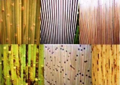 Бамбуковые обои: плюсы и минусы выбора