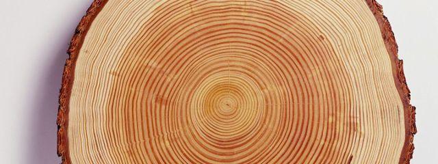 Дом из лиственницы  — плюсы и минусы строительства