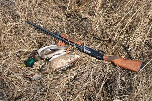 Плюсы и минусы 243 калибра на охоте