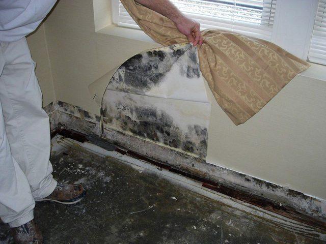 Стоит ли покупать квартиру, где есть плесень