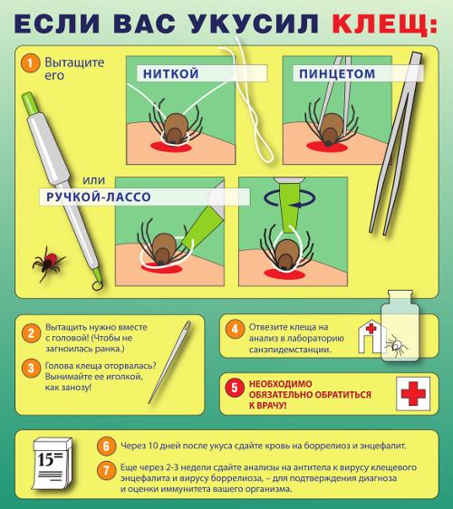 Стоит ли ставить прививку от клещевого энцефалита?