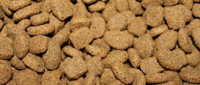 Стоить ли кормить собаку сухим кормом?