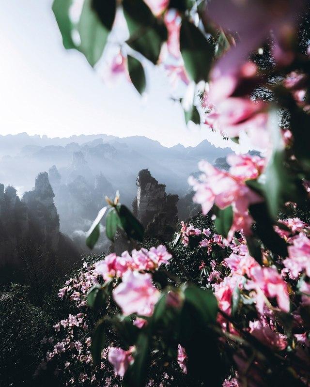 Стоит ли ехать учиться в Китай — плюсы и минусы