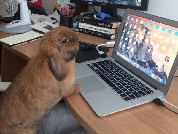 Кролик в квартире: плюсы, минусы и что нужно знать