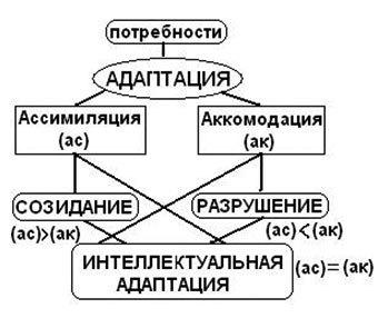 Когнитивная теория Пиаже: плюсы и минусы