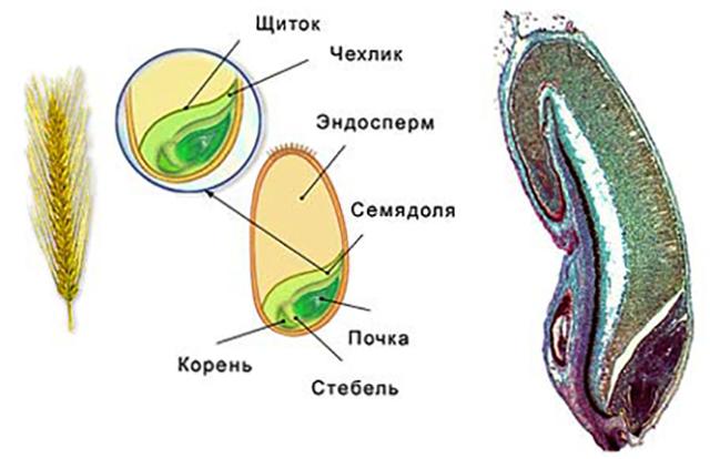 Основные плюсы и минусы полового размножения