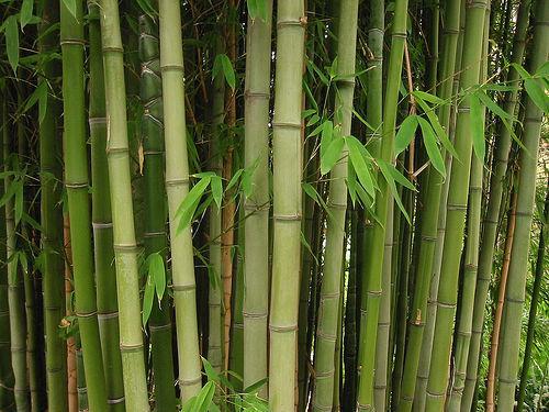 Нижнее белье из бамбука: плюсы и минусы