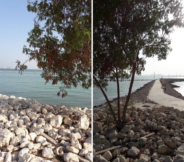 Жизнь и работа в Катаре: плюсы и минусы выбора страны