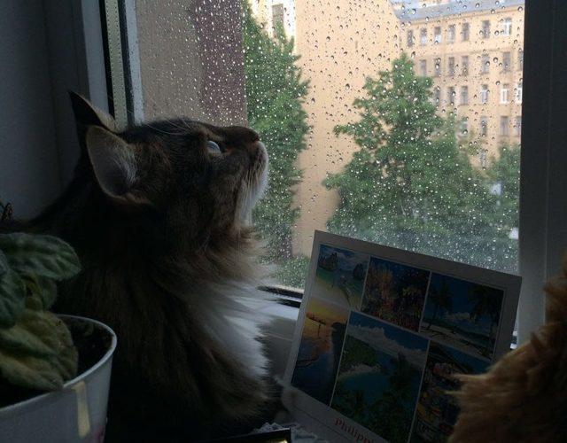 Стоит ли брать котенка из приюта: особенности и нюансы
