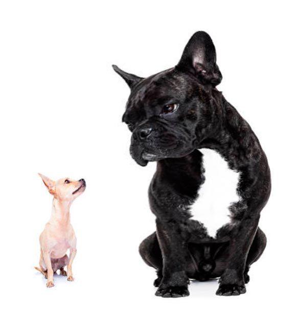 Плюсы и минусы заведения двух собак в доме