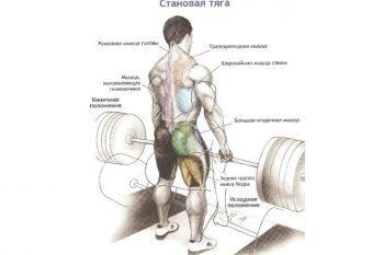Стоит ли делать становую тягу — плюсы и минусы упражнения