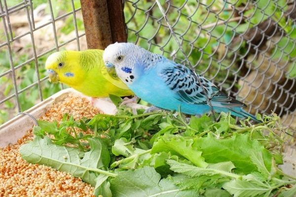 Заведение попугая: плюсы, минусы и стоит ли?