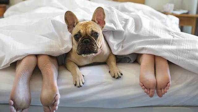 Собака в квартире — плюсы и минусы заведения