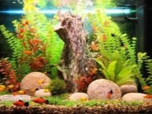Песчаник для аквариумов, его преимущества и недостатки